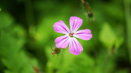 Pink flower in grass Stock Photo