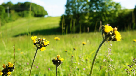 Detailed yellow flowers on meadow