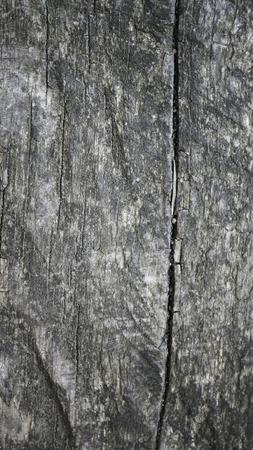 Close up wood texture