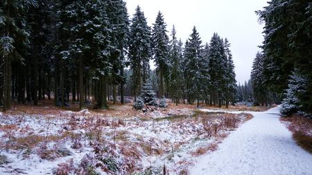 Snowy road in winter forest