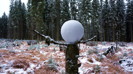 Snowball in winter forest