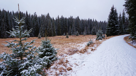 Forest in winter with snowy meadow and snowy road