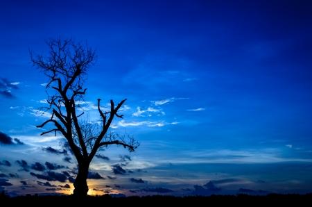 Silhouette dead tree on dark blue sky in sunset photo