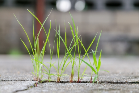 grass growing through crack in concrete-close up