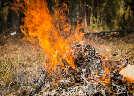 defilement: fire burning refuse, poisonous smoke,cause of wildfire Stock Photo