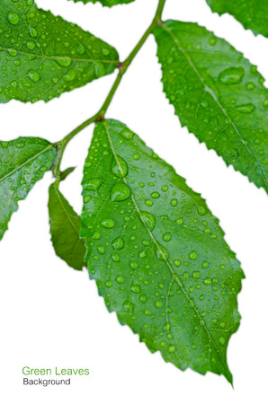 Green leaf with water droplets,Closeup. photo