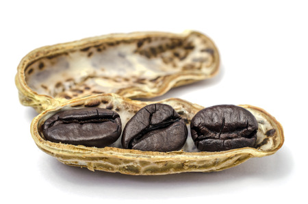 Coffee beans in nut shell isolated-unusual. Banque d'images