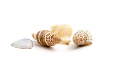 marine crustaceans: Shells of marine crustaceans on a white background Stock Photo
