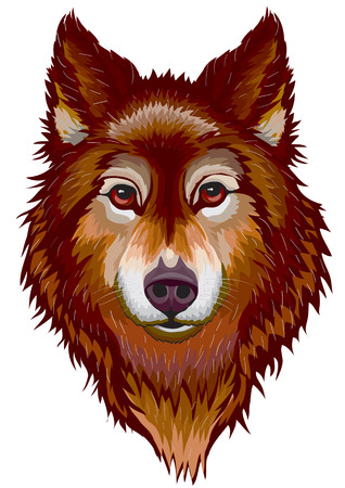Portrait of the brown wolf
