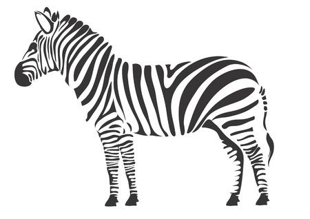 Black zebra on a white background Illustration