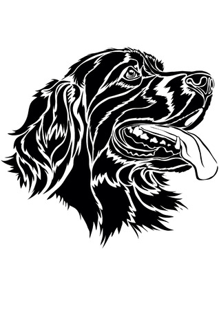 Well traced structure of a dog