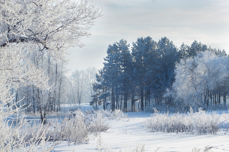 winter landscape of snow-covered fields, trees photo