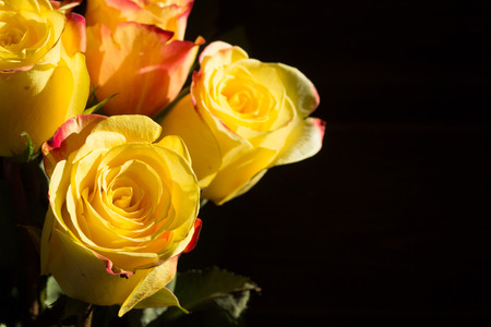 unwrapped: several unwrapped yellow rose on the black background