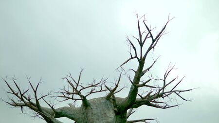 Old dead tree against a gray sky. concept horror halloween. copy space