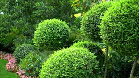trees with green foliage in beautiful rounded shapes. with blooming flower beds. Imagens