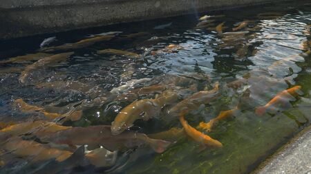 pools with fish on a trout farm, fish farm concept