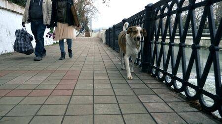 Una pareja de vagabundos y una mujer caminan en un parque de la ciudad.