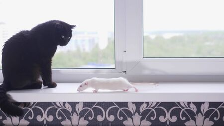 black cat and white mouse together on the windowsill Zdjęcie Seryjne - 146951191
