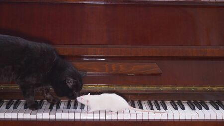black cat and white mouse together playing the piano