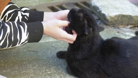 female hands stroking a black cat outdoors on a clear sunny day Zdjęcie Seryjne