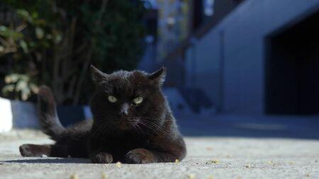 portrait of a black cat lying outdoors on a clear Sunny day. Zdjęcie Seryjne - 146385777