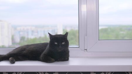 black cat lies on a white windowsill in a city apartment. copy space Zdjęcie Seryjne - 149246905