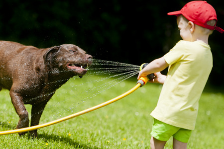 Child playing with brown labrador using the hose with water