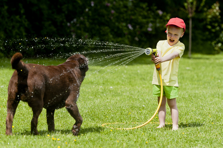 brown labrador: Child playing with brown labrador using the hose with water