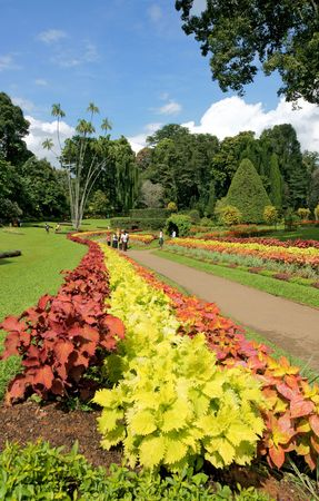 Peradeniya Botanical gardens, the finest of its kind in Asia, the largest of the three botanical gardens in the island, couldnt be better located. In the Mediterranean climate of Kandy, the gateway to the central highlands, the Gardens were bounded on th