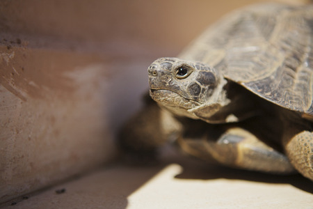 ancient turtles: Close-up of tortoise