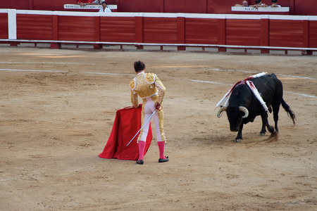 Toreador standing close to bull in corrida performance in Spain