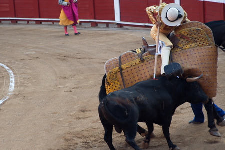 corrida: Bull attacking picador in corrida performance in Spain Stock Photo