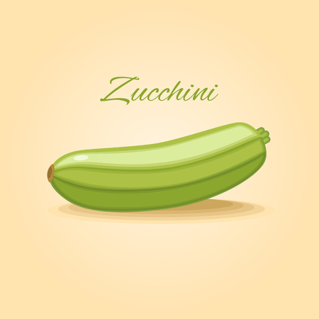 marrow: Fresh zucchini, marrow squash vegetable vector illustration