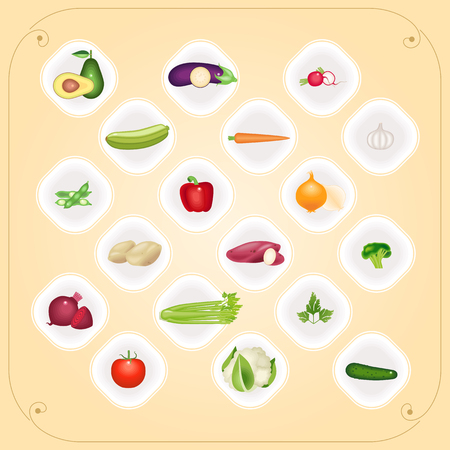 cucurbit: Set of organic vegetables on the plates, vector illustration