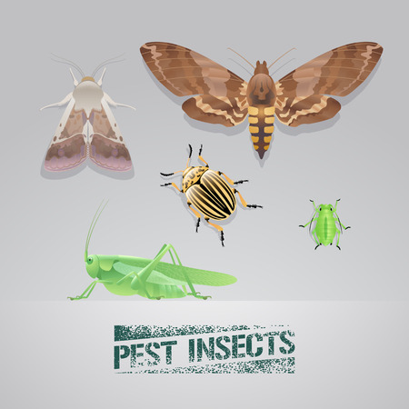Set of pest insects vector realistic illustration. Agriculture and garden pest bugs, fly, colorado beetle, locust, moths. Pest insects stamp sign
