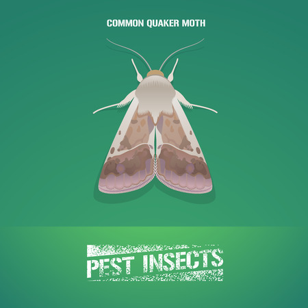 in common: Realistic vector illustration of insect Noctuidae, common quaker moth. Pest insect of agriculture farmland. Design element for insecticide poster, brochure, article