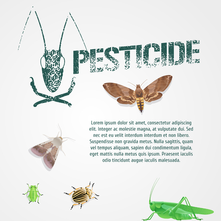 article: Set of realistic pest insects and template bodycopy vector illustration. Design element, article, icons of agriculture and garden pest bugs, fly, colorado beetle, locust, moths. Pesticide stamp sign Illustration