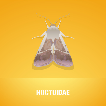 insecticide: Realistic vector illustration of insect Noctuidae, common quaker moth. Pest insect of agriculture farmland. Design element with Latin sign for insecticide poster, brochure, article
