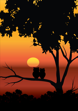 sunsets: Vector illustrations , The Owl and the beautiful sunsets.