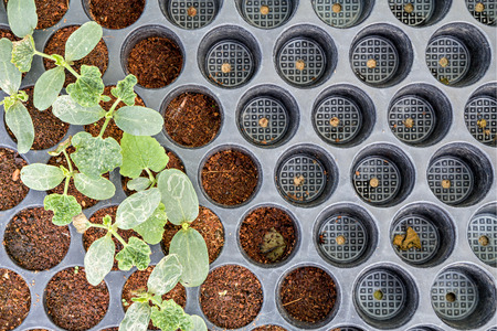 potting: Seedling planted in the potting shed Stock Photo