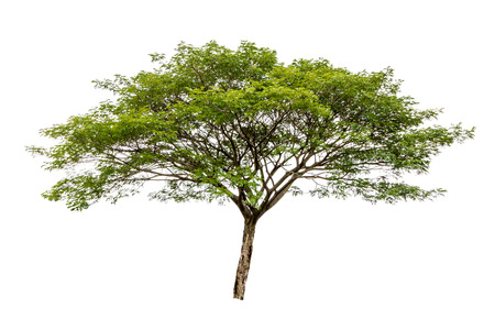 Big tree isolated on white background