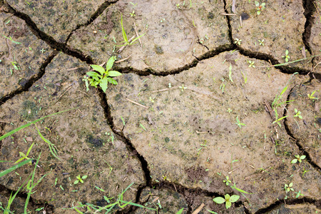stopped: Plant and raindrops on cracked ground after stopped raining Stock Photo