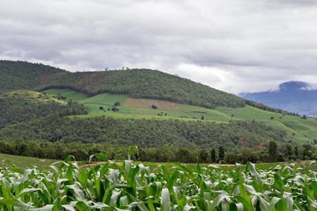 deforestacion: La deforestación en la montaña para la agricultura Foto de archivo