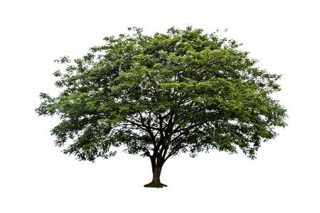 Big tree isolated on white background