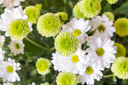bush to grow up: Close up of white-green flowers