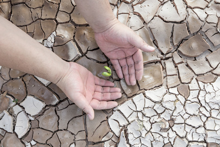 infertile: Hands defending green tree sprout on cracked ground, conservation concept Stock Photo