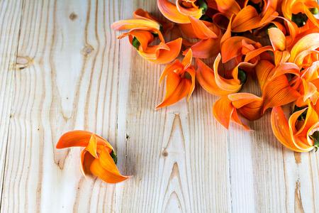 erythrina: Pile of Bastard Teak or Bengal Kinos flowers on wood