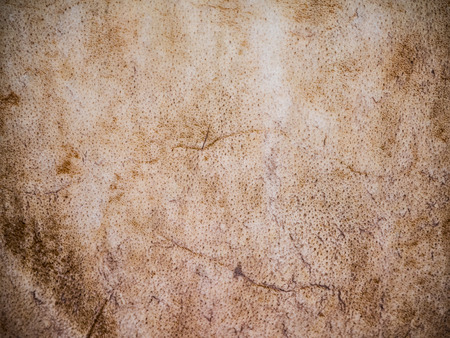 mottled skin: Leather surface of old drum,make from buffalo leather,use as background Stock Photo