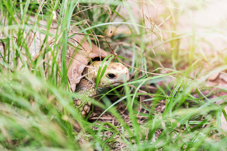 Turtle crawls through the grass on the shore of a pond Imagens