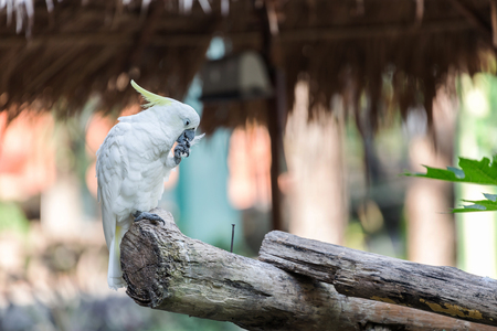 periquito: Una cacatúa en una rama de árbol, Cockatoo en una percha Foto de archivo